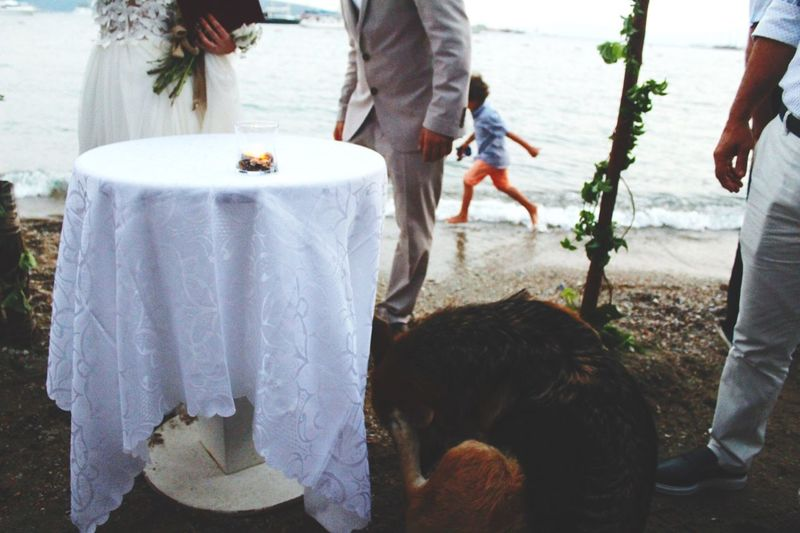 Fun moment from the wedding If Anyone Disagrees Speak Now The Dog Disagreed LOL Wedding Summer Fun Happiness Memories Togetherness Outdoors Pets Dramatic Angles