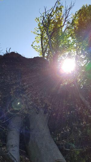 Tree Astronomy Sunlight Sky
