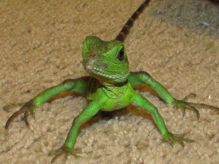 i Love this kid. lol Reptiles Mylizard Lizard Love