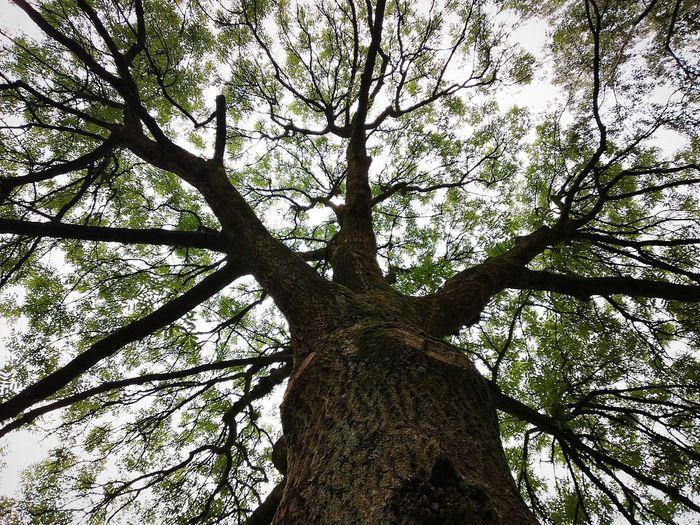 just a big tree