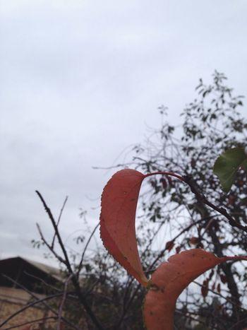 Automne Sky Rain