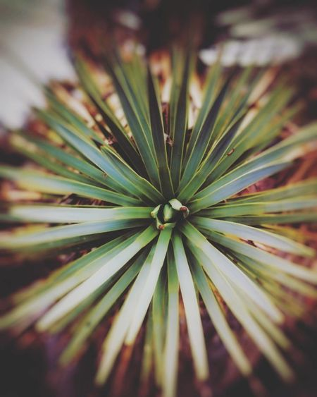 Green Color No People Close-up Outdoors Nature Beauty In Nature Freshness EyeEm Growth Tranquil Scene Pattern Non-urban Scene EyeEm Nature Lover Maximum Closeness Plant