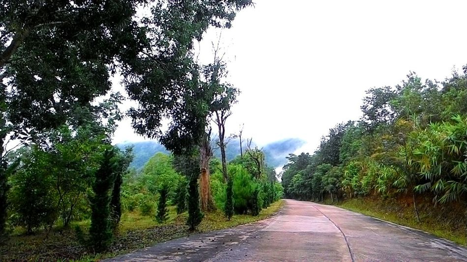 Thailand Natural Loei,thailand Route Trees Early Morning Naturelovers View Sky And Trees Foggy Morning Asuszenfone5