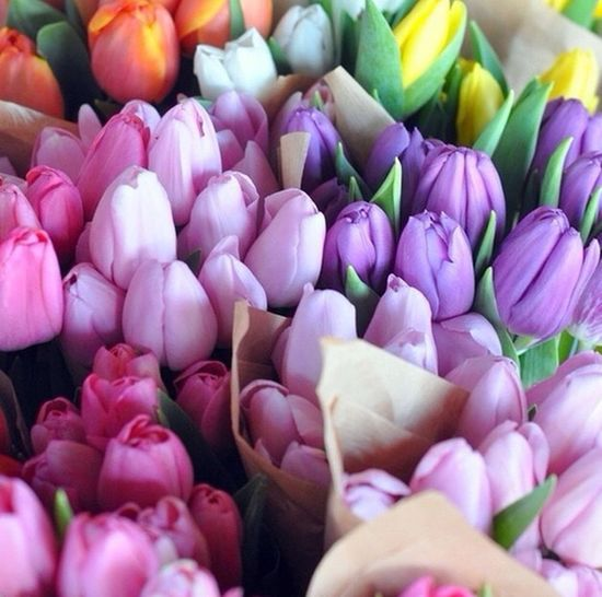 I love tulips?