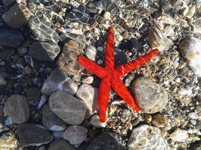Sea Seastar Loving Sea Tranquility Nature Nofilters Red Vibrant Color