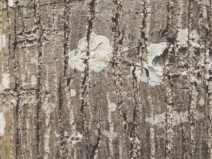 Textured  Backgrounds Full Frame Cracked Pattern Brown Close-up Rough No People Day Outdoors