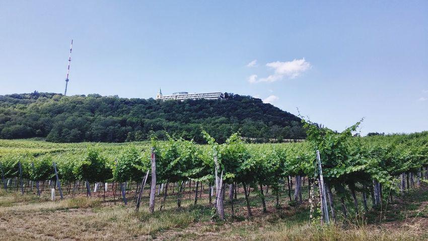Wine Wineyards Wine Tasting Winelover Need For Speed Winedope