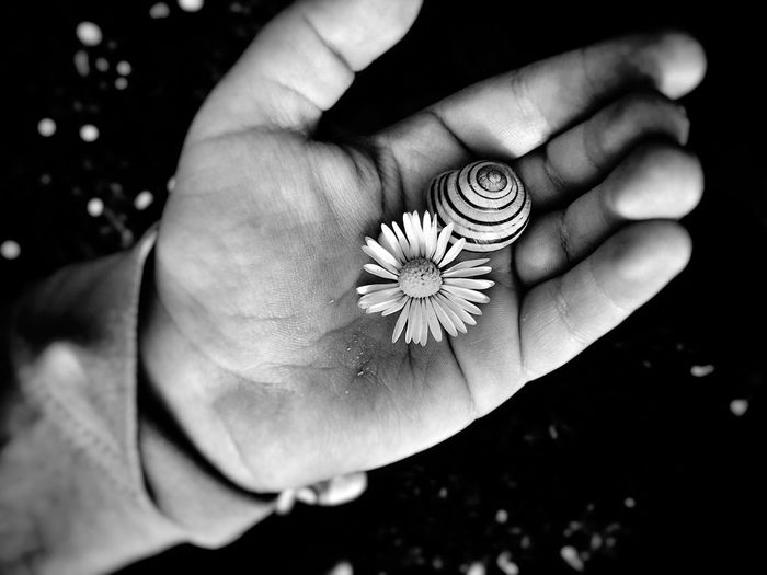 Cropped hand showing flower and animal shell at night