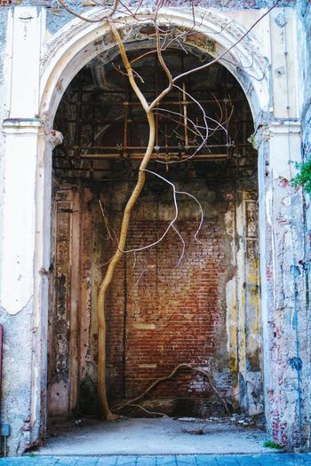 A second pic from the same church. Tree_collection  Treegasmic Tuesday Eye4photography  Urbexphotography Urban Exploration