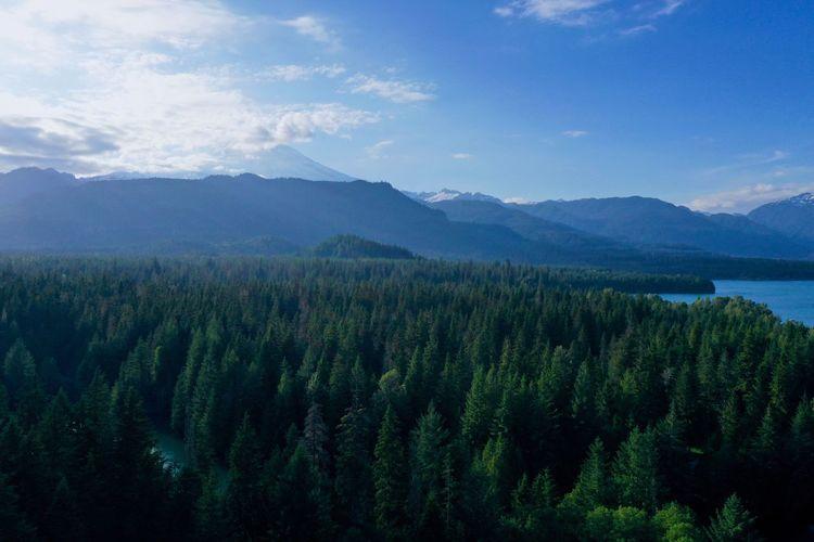 Tree Scenics -