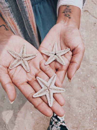 Caught a fallen star (and more) EyeEm Selects Star Shape Starfish  Human Hand Human Body Part One Person Real People Sea Life Animals In The Wild Nature Palm Day