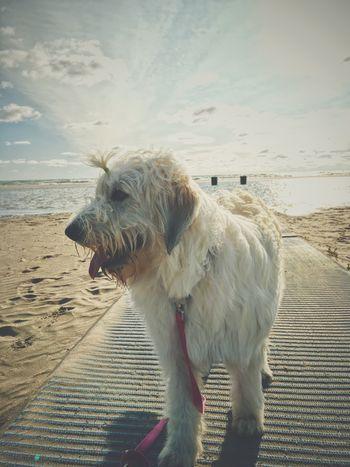 Mayhem Beach Dog Beach Hair Dont Care Lake Michigan IPhoneography VSCO Vscocam