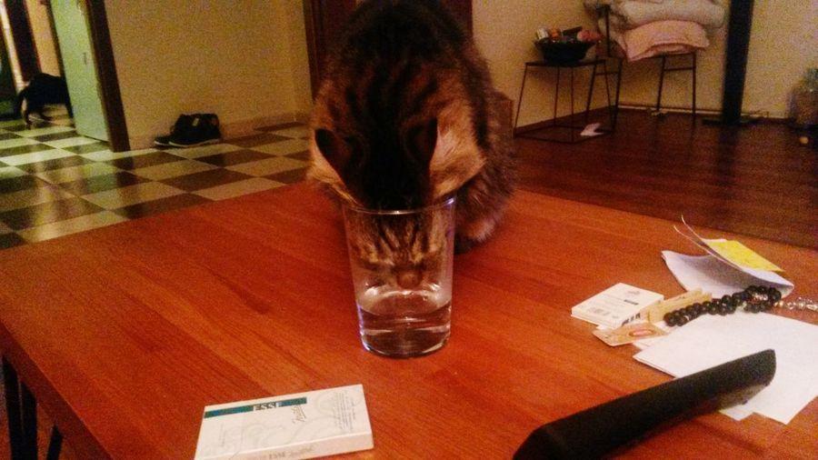 Kedi Kedicik Kedi Aşkı
