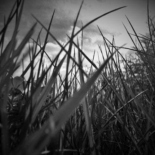 Grass Bainvalleypark Photography B &w