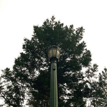 Street Lamp Tree Low Angle View No People Outdoors Architecture Day Nature