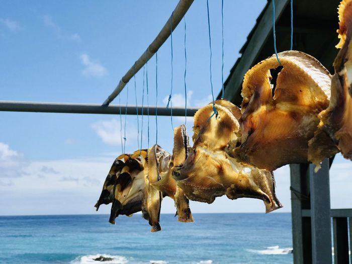 曬乾的飛魚,可以游回大海嗎