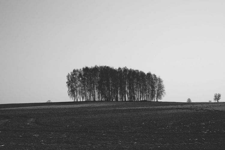 Shadow Nature Nature_collection Nature Photography Monochrome monochrome photography Bnw Blackandwhite Black And White Tree Agriculture Rural Scene Sky Idyllic Calm Non-urban Scene Single Tree