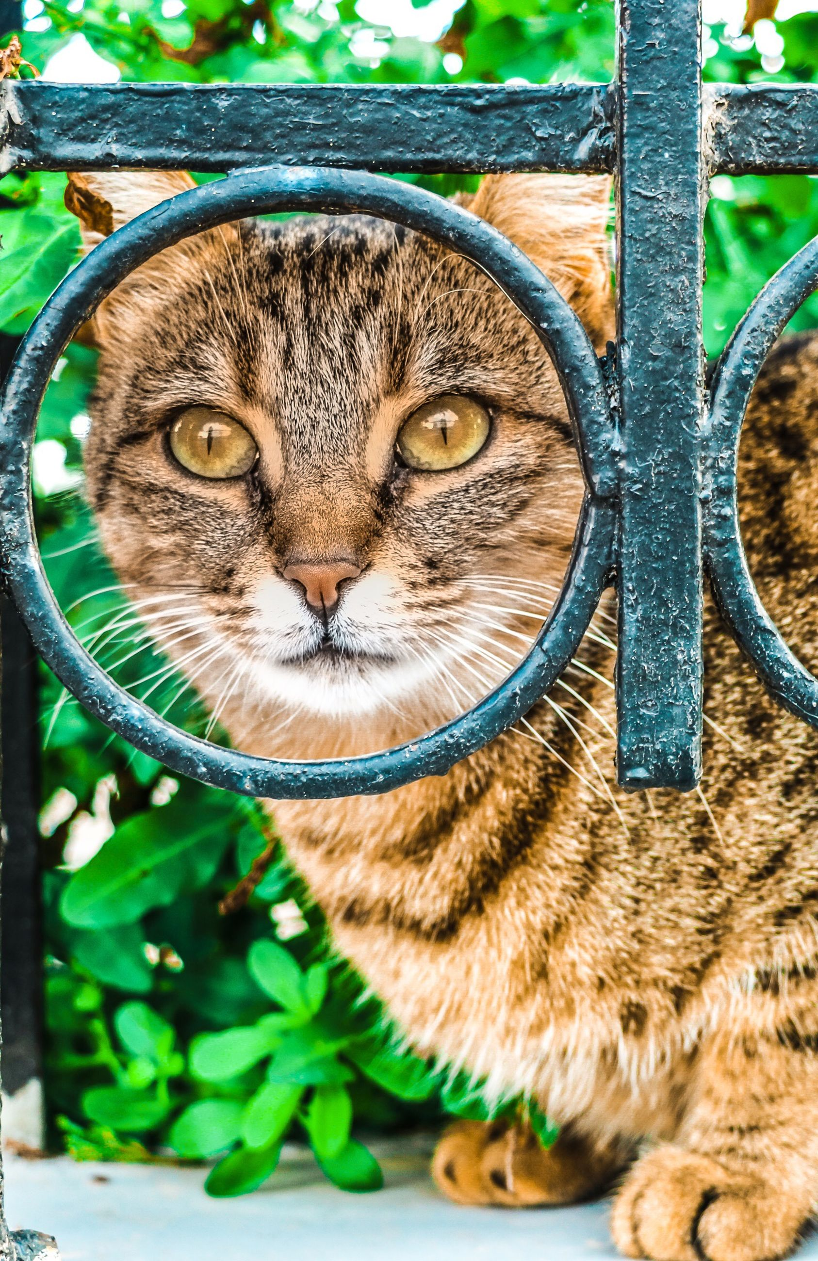 pets, cat, domestic cat, feline, mammal, domestic, domestic animals, one animal, vertebrate, looking at camera, portrait, no people, close-up, day, whisker, animal body part, sitting, animal eye