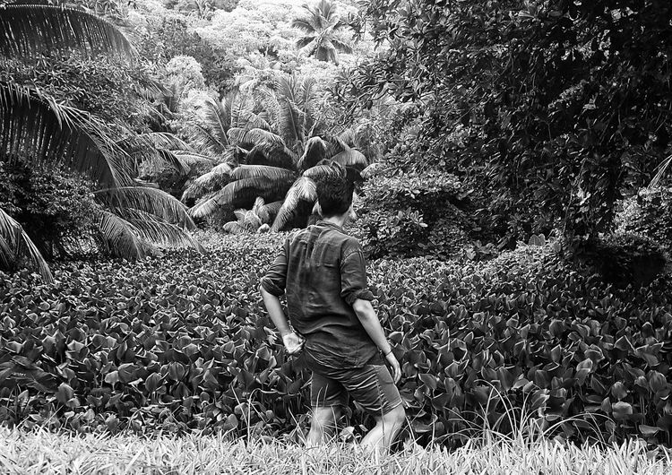 Jungle Exploring Nature Islands Seychelles Turnyourback My Photography Blackandwhite Photography Barefoot Humid Photography The Great Outdoors The Great Outdoors - 2016 EyeEm Awards