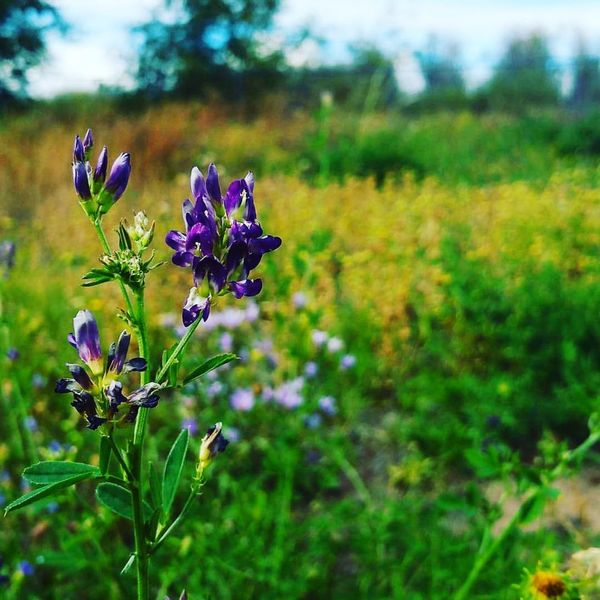 Light of my life. Antonito Colorado Flowers Landscape Hikingadventures Lovely AtPeace Tranquility Beauty In Nature Day Scenics Nature Tranquil Scene No People Outdoors