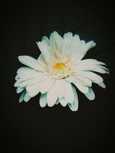 EyeEmNatureLover#flower#Nature_collection EyeEm Nature Lover Eyeemnature Enjoying LifeEyeEm Gallery PhonePhotography EyeEm Hello World Relaxing OpenEdit