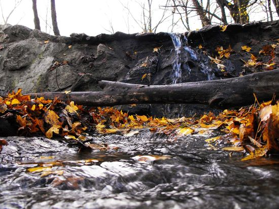 Colour Of Life Nature Leafage Bough Rippling Water Stream