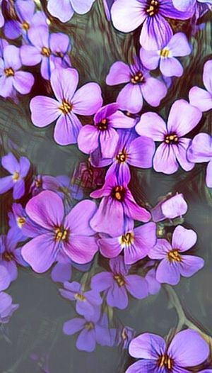 Photography Flower Flower Head Petal Purple My Edit Picsart Edit Eyeem Edit