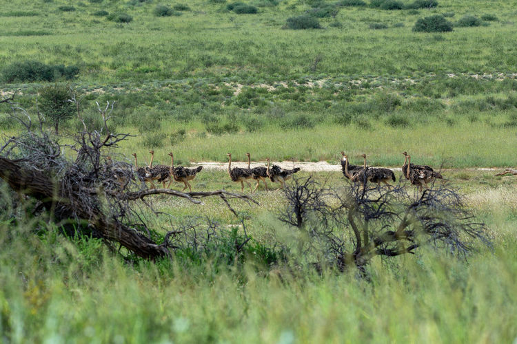 View of sheep on grassland