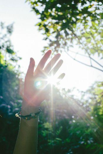 舍利 Hand Human Hand One Person Real People Human Body Part Plant Nature Finger Human Finger Sunlight Lifestyles Sky Lens Flare Outdoors Leisure Activity Close-up Body Part Day Tree Unrecognizable Person