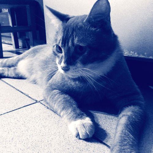 Today's Hot Look Taking Photos Cat Hi! EyeEm Best Shots - Black + White That's Me