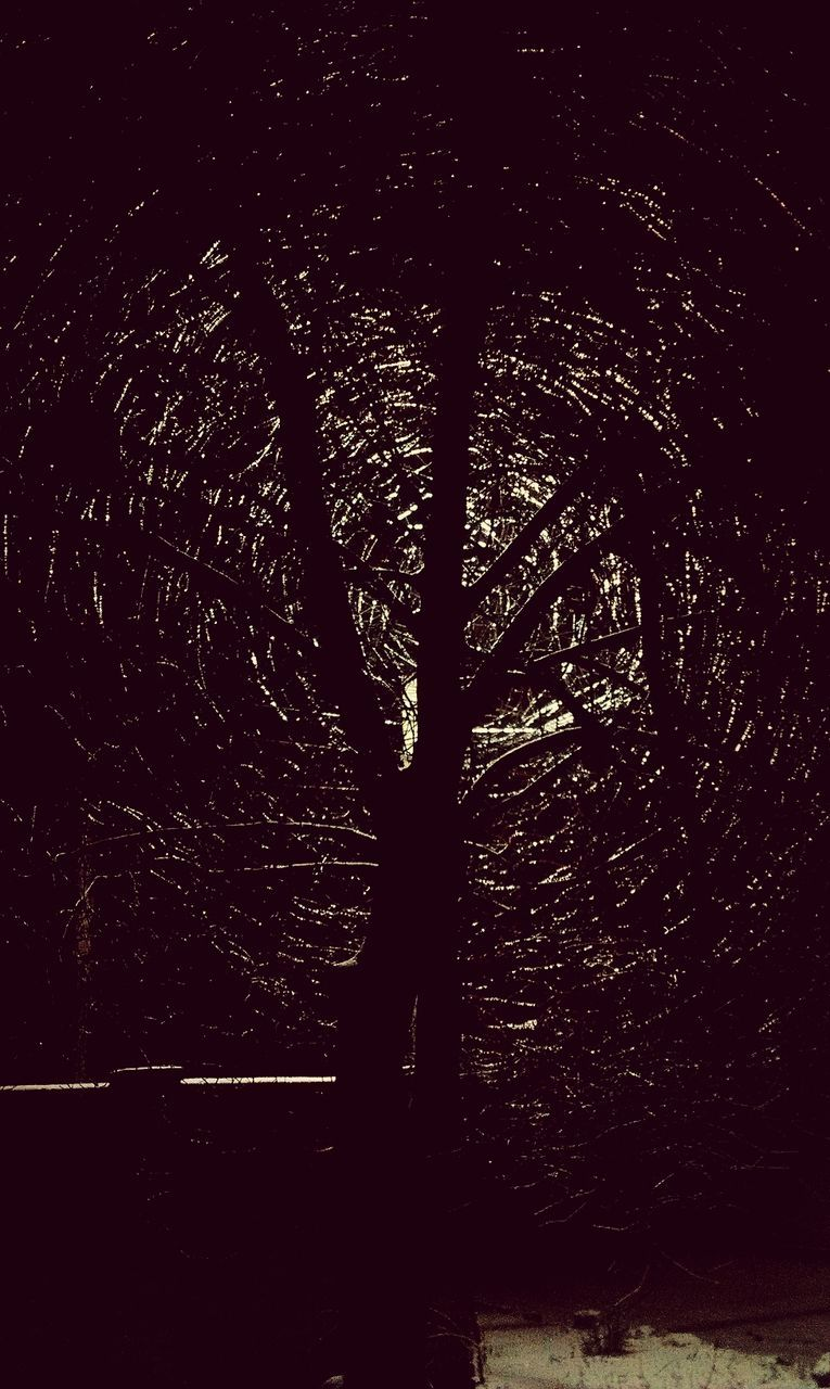tree, silhouette, night, one person, growth, outdoors, nature, forest, standing, real people, beauty in nature, people