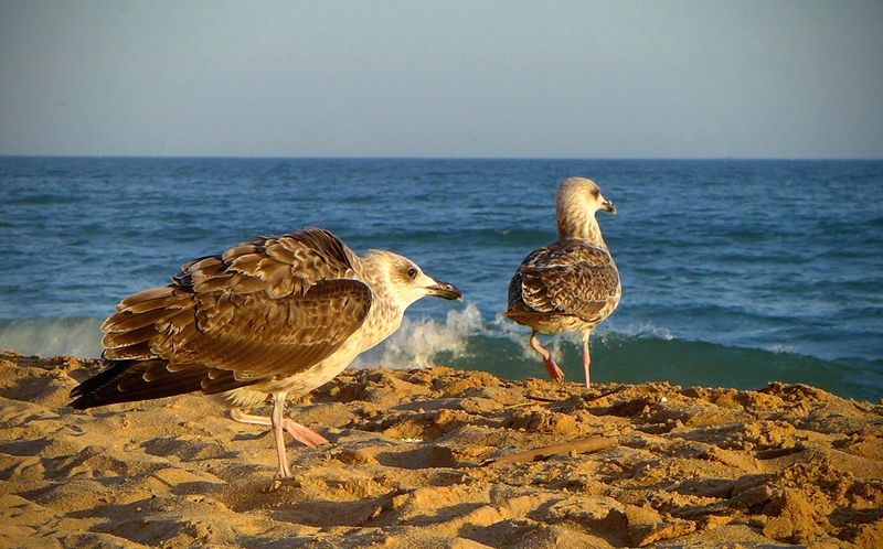 Two Animals Two Birds Bird Birds Beach Beachphotography Animals Fly Seagull Seagulls Sand Water Sea Sea And Sky