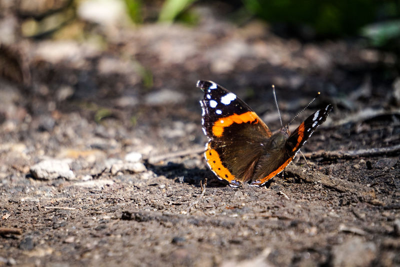 Close-up of butterfly on a field