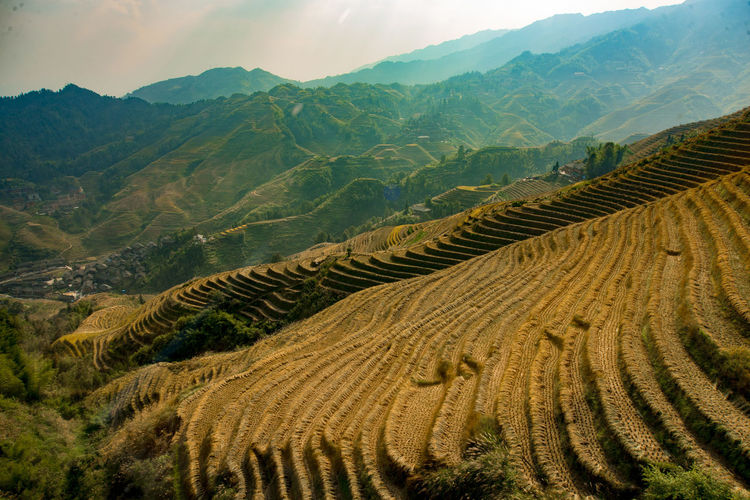 Agriculture Beauty In Nature Day Farm Field Landscape Mountain Mountain Range Nature No People Outdoors Rice - Cereal Plant Rice Paddy Scenics Sky Terraced Field Tranquility