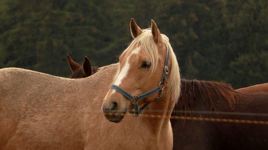 Horseriding Horse Horses Horse Riding Love Rain Raining