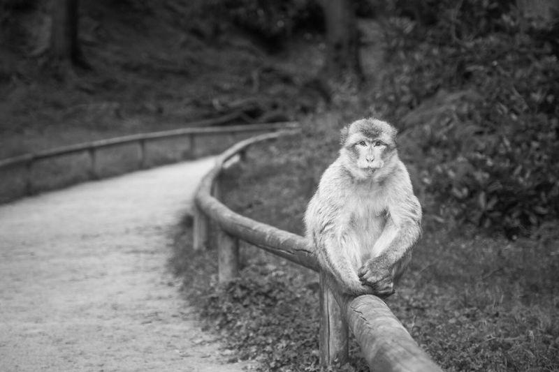 Portrait of lion sitting outdoors