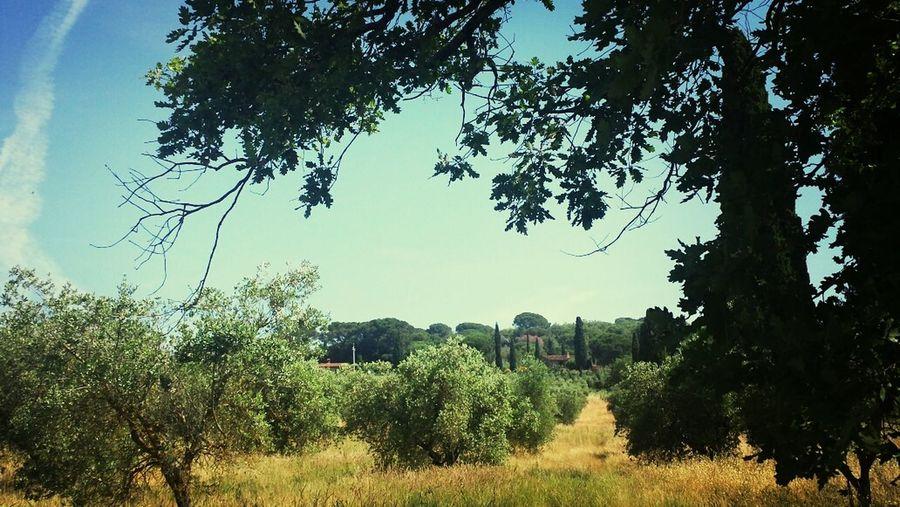 Sun Sky Umbria Italy