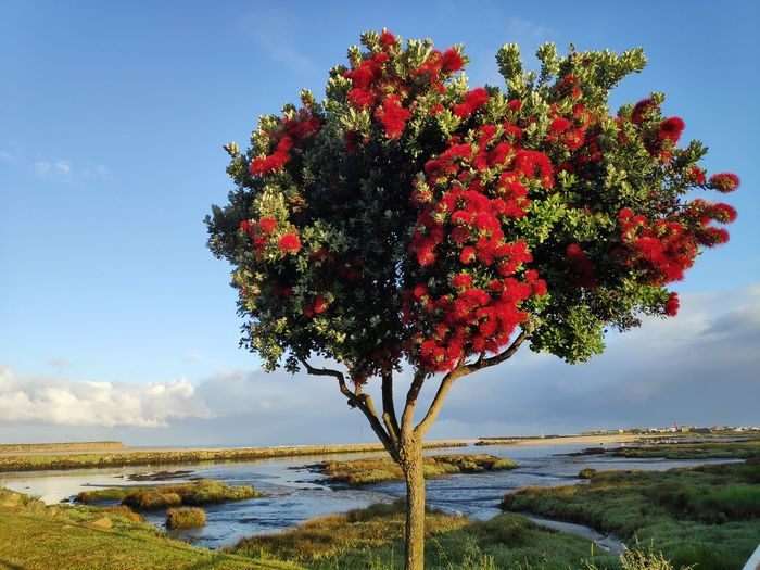 Scenic view of flowering tree by sea against sky