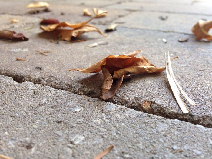 Crispy Autumn Leaf Leaf Autumn Dry Change Street Fallen Day Fragility Nature Outdoors Tranquility Focus On Foreground Beauty In Nature Surface Level Leaves Tranquil Scene Scenics No People Footpath