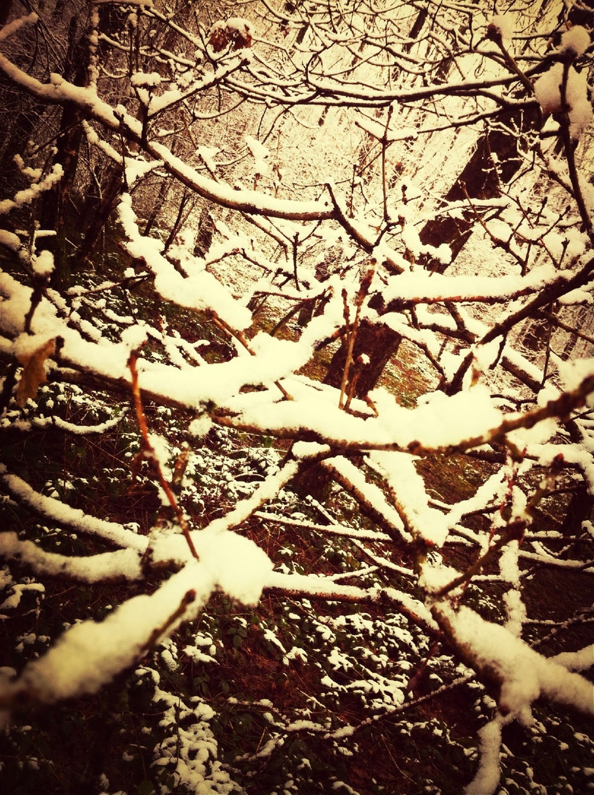 tree, season, branch, bare tree, winter, cold temperature, snow, nature, autumn, lifestyles, leaf, tree trunk, covering, high angle view, leisure activity, day, outdoors, frozen