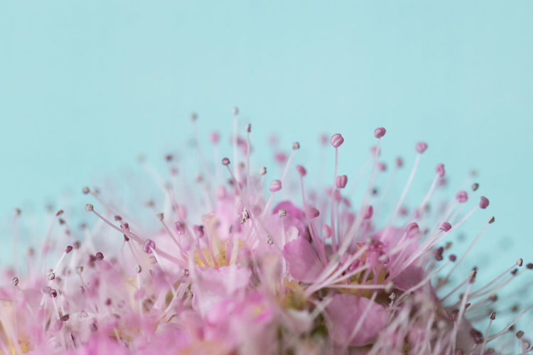 Beauty In Nature Close-up Flower Flower Head Flowering Plant Fragility Nature No People Pink Color Pink Flower Plant Stamen Vulnerability