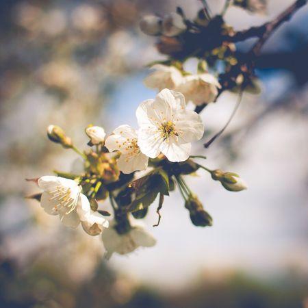 Spring Kitsch Blossom Romantic Nature Trees