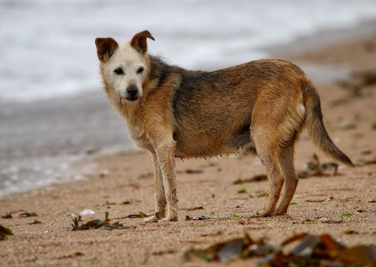 Close-up of dog standing at beach