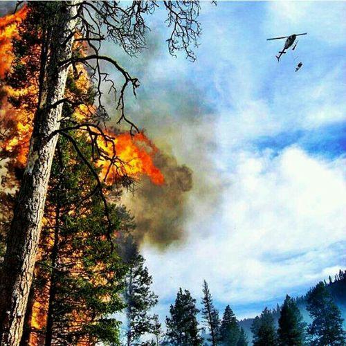 Fire Wildlandfirefighter