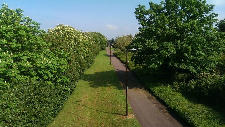 MK Green Green Green!  Treestreestrees Pathway Lamp Posts Daylight Green No One Around Bright Day Clouds And Sky