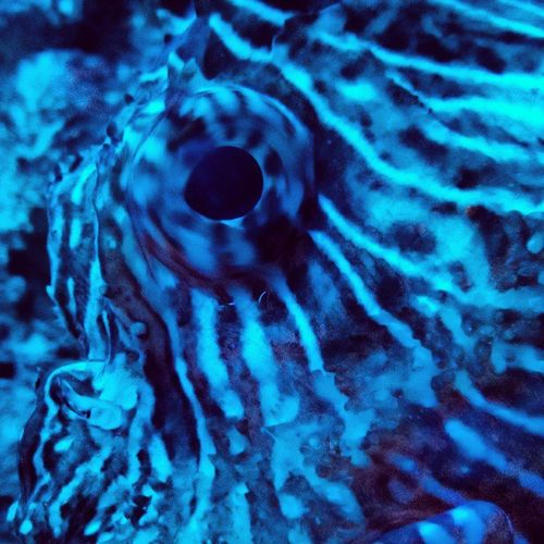 Fisheye Seademon Aquatopia