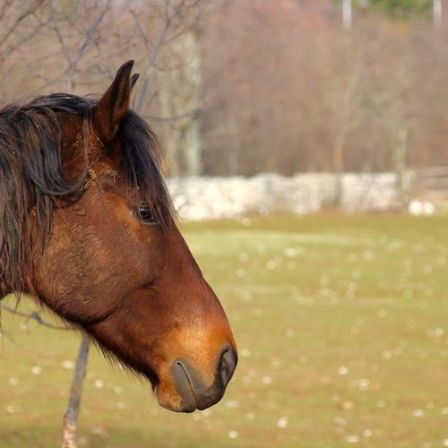 Cavallo Carsico Nature
