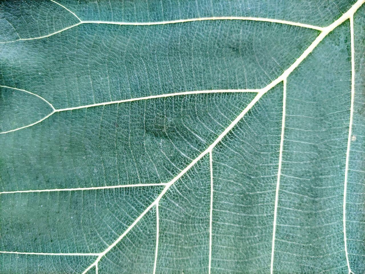 FULL FRAME OF GREEN PLANT