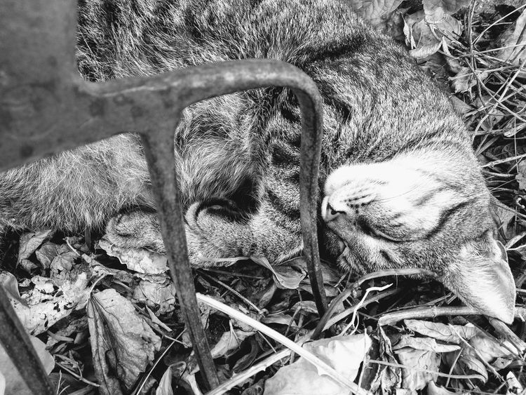 Zzz Animal Themes Animal Wildlife Animals Animal Photography Animal_collection Bw_collection Bw BW_photography Cat Garden Garden Photography Sleeping Lovely Dreaming Leaves Park Nature_collection House Home Close-up