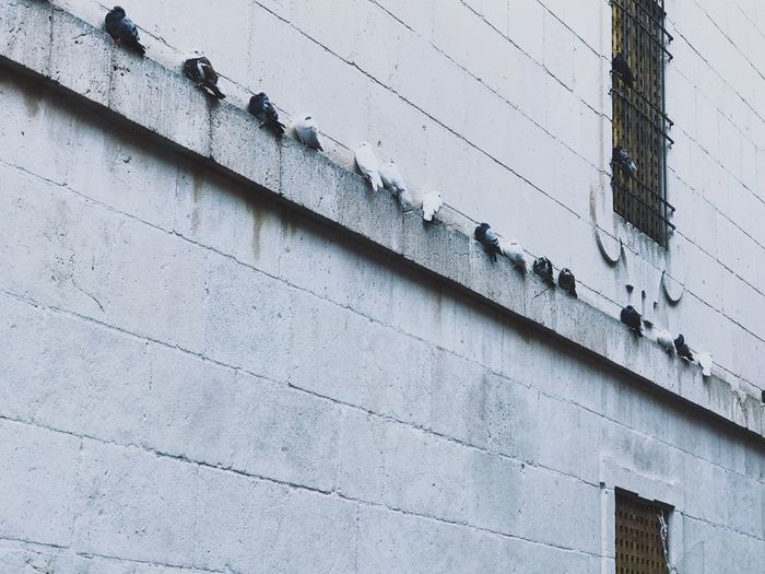 Building Exterior Architecture Built Structure Low Angle View Outdoors Day Real People Nature Adapted To The City Pidgeons Birds Bird Building Wall